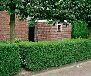 Siepi Da Giardino Prezzi : Come realizzare una siepe da giardino idee green