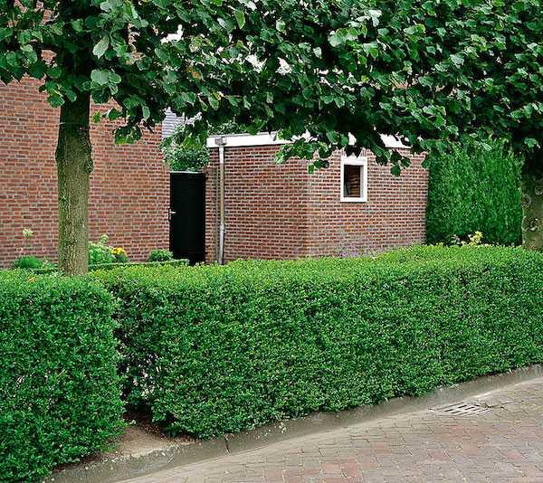 Come realizzare una siepe da giardino idee green - Muretti da giardino ...