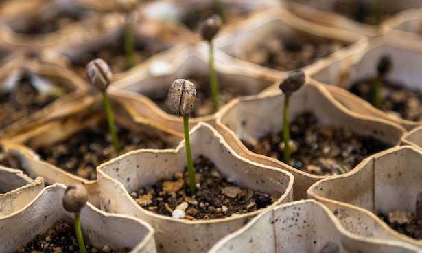 Come far germogliare i semi