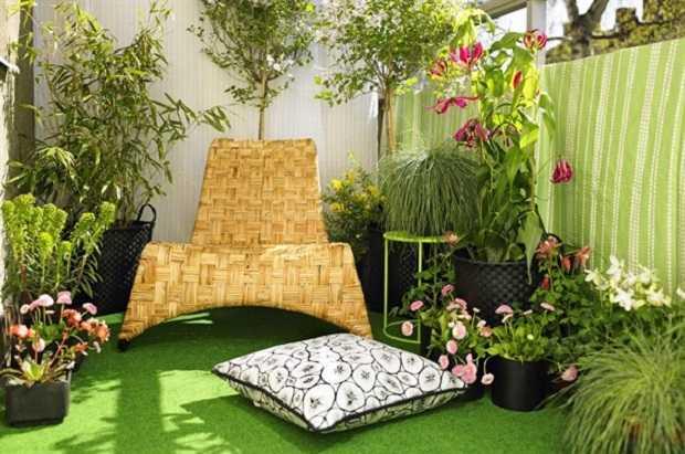 Come coltivare le piante in terrazzo idee green for Piante da terrazzo sempreverdi
