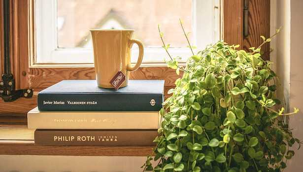 coltivare piante da appartamento