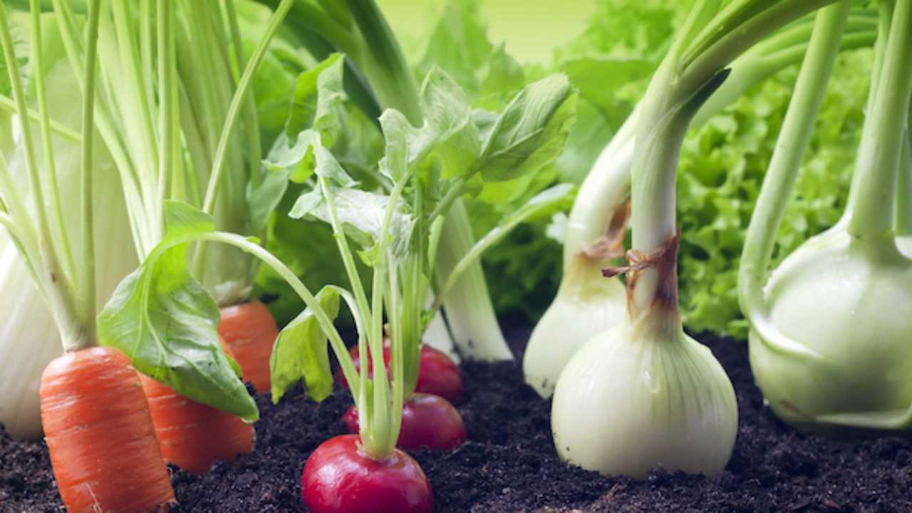 Coltivare Piselli In Vaso cosa coltivare a dicembre - idee green