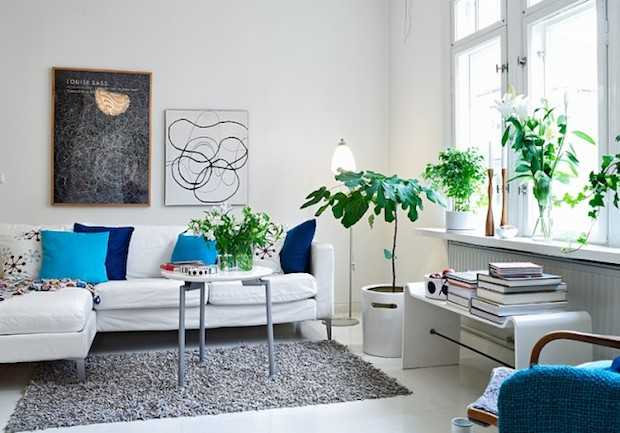 curare piante da appartamento