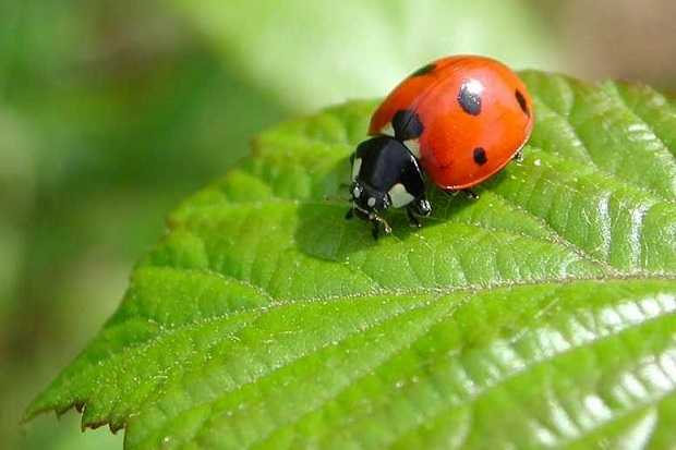 difendere orto dai parassiti