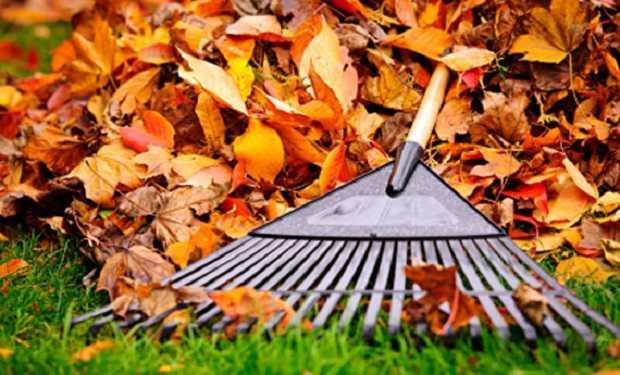 Come usare le foglie secche per il compostaggio idee green for Piante secche ornamentali