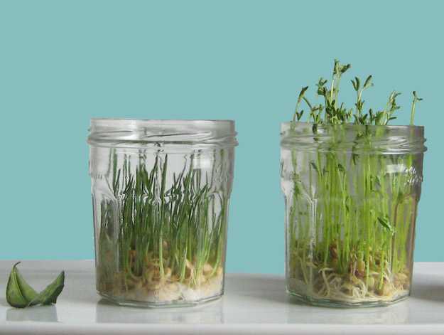 come far germogliare piante