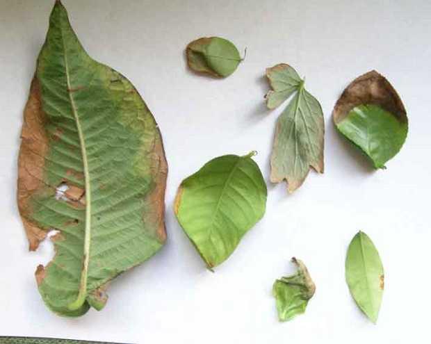 Come riconoscere le malattie delle piante Idee Green