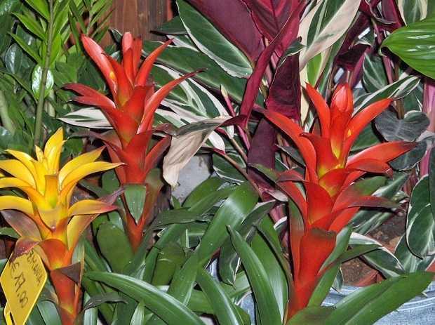 Piante ornamentali d 39 appartamento idee green for Piante grasse ornamentali