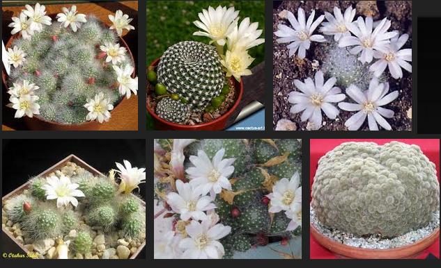 Piante grasse resistenti al freddo idee green - Idee piante da giardino ...