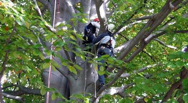 tree climbing italia