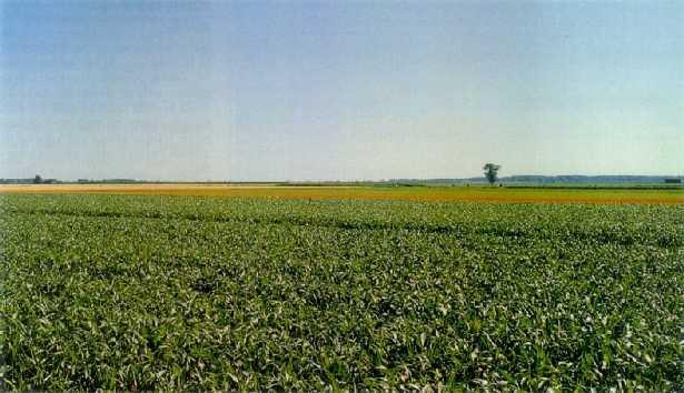 campo-agricoltura-veneto