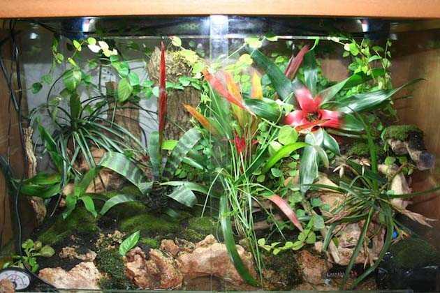 Come riciclare un acquario idee green for Filtro acquario fai da te