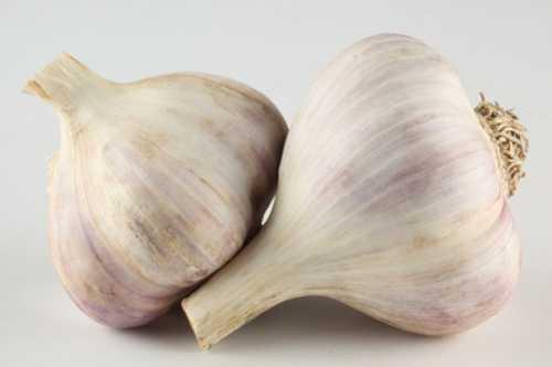 antiparassitari-aglio