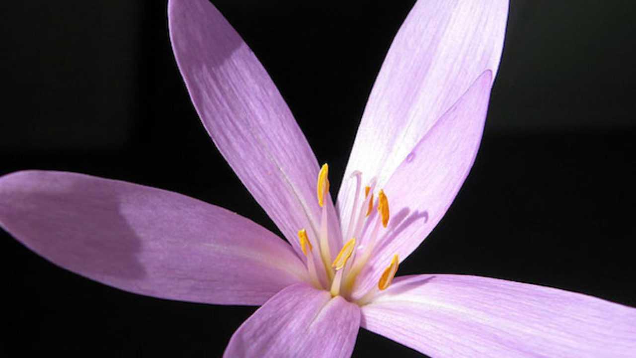 Quali Bulbi Piantare In Primavera bulbi da fiore, la guida - idee green