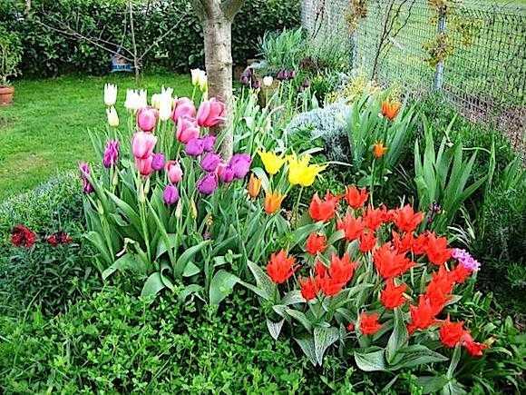 coltivare bulbi da fiore