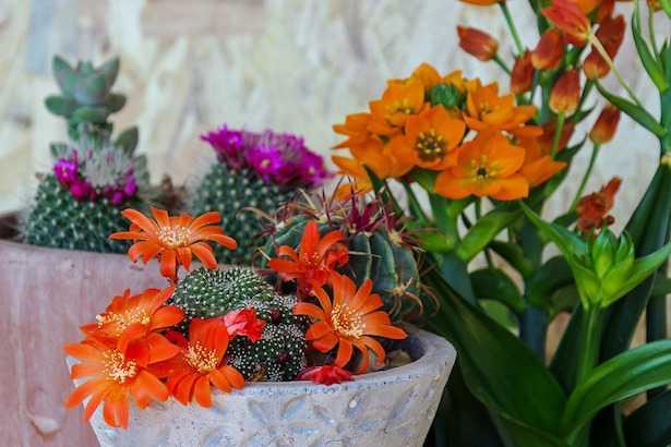 come piantare piante grasse in giardino