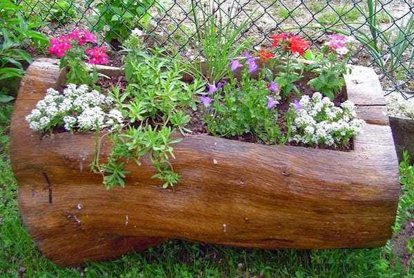 fioriera nel tronco di un albero