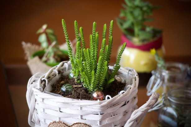 Piante Grasse Da Appartamento Quando Innaffiare.Piante Grasse In Casa Cure E Consigli Idee Green
