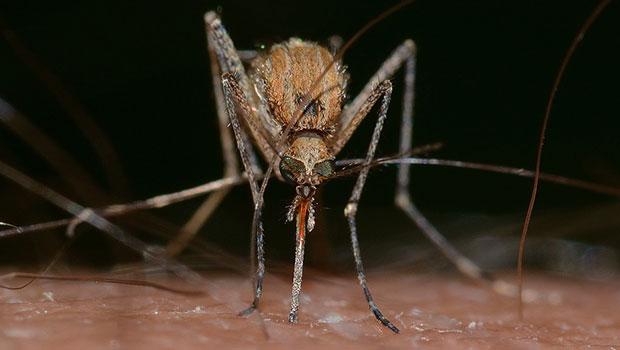 Come allontanare le zanzare