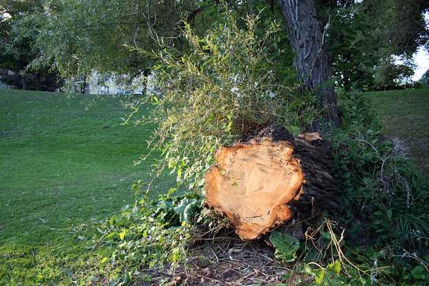 abbattere un albero