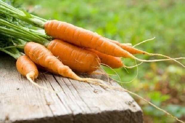 carota proprietà