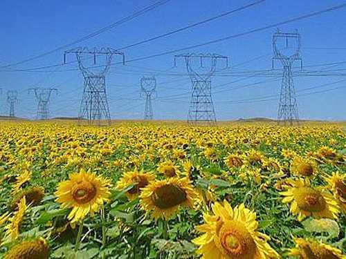 efficienza-energetica-agricoltura