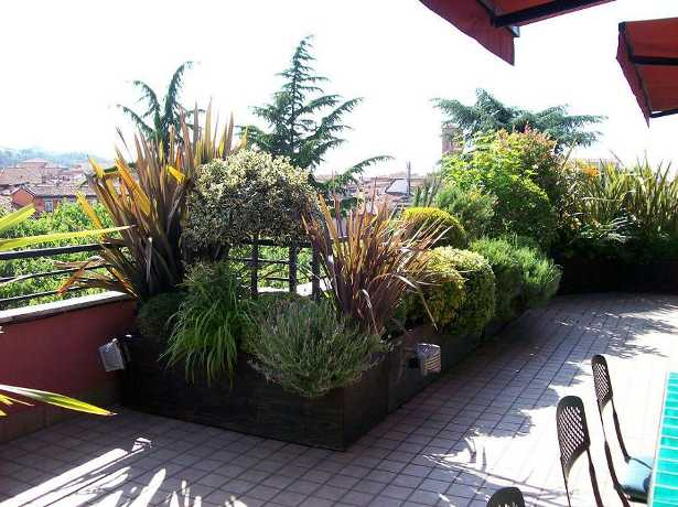 Terrazzo fiorito come scegliere le piante idee green - Piante sempreverdi per terrazzi ...