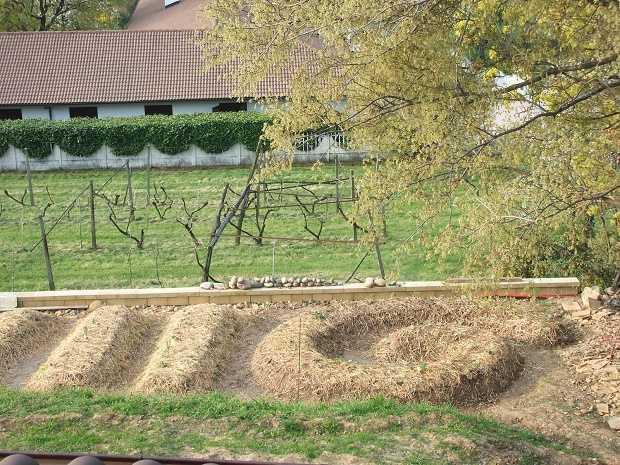 come realizzare un orto sinergico