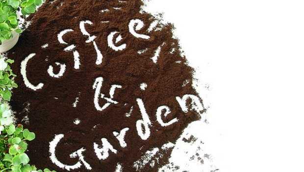 come riciclare fondi di caffè