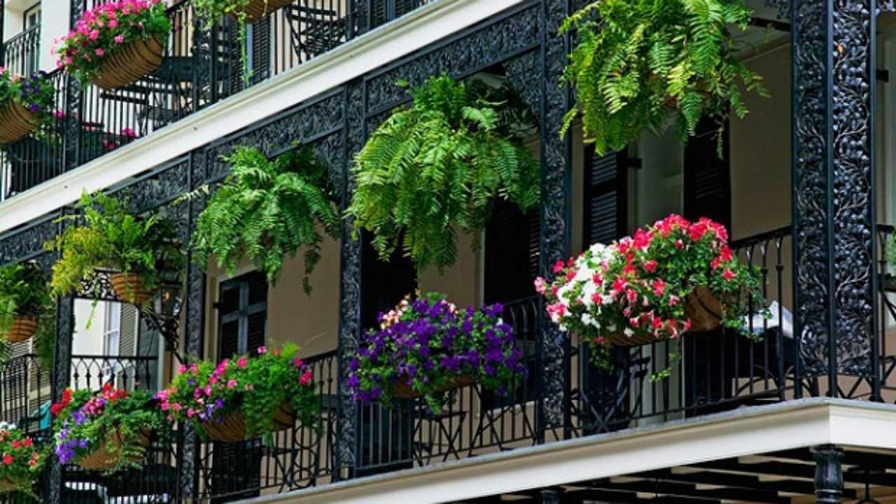 Vasi Per Piante Da Terrazzo come scegliere le piante da balcone - idee green