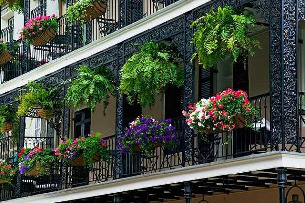come scegliere le piante da balcone