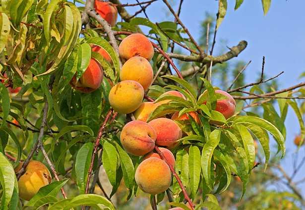 frutteto urbano