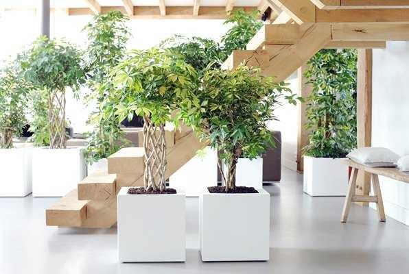 piante che purificano l aria