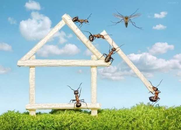 rimedi contro le formiche