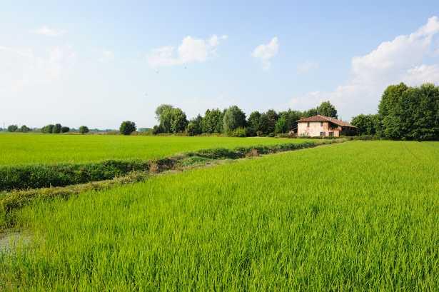 Scorcio del Parco Agricolo Sud Milano nella Pianura Padana