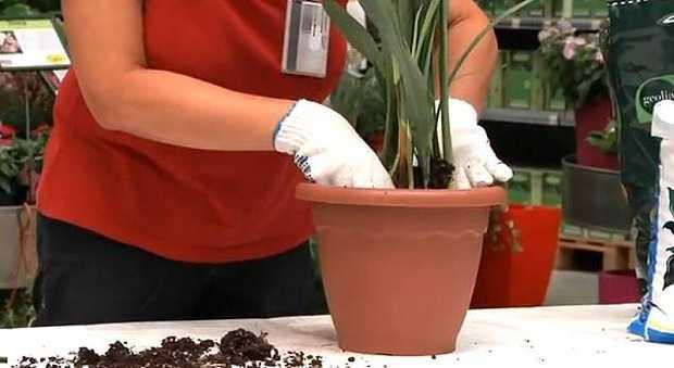 come travasare le piante