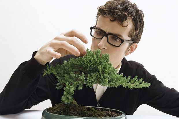 Cura del bonsai tutte le indicazioni idee green for Alberelli da esterno