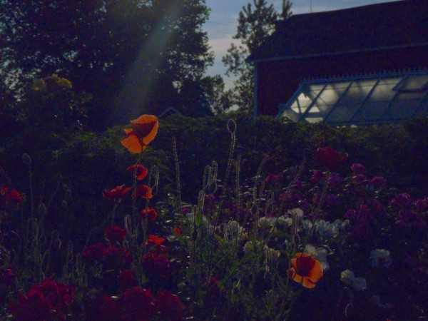 fasi lunari e fiori