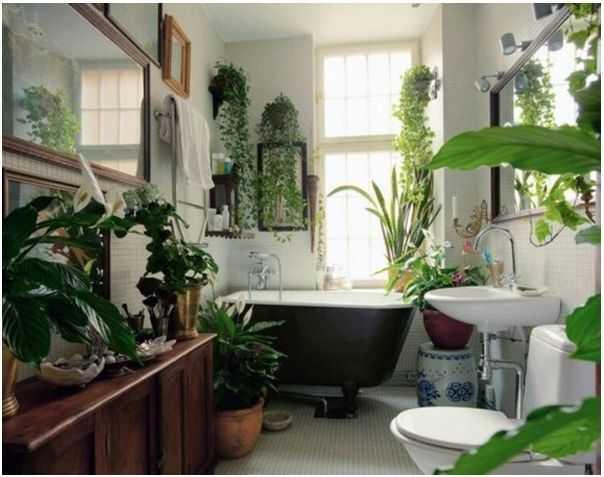 piante per arredare