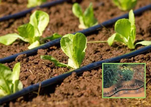 sistemi di irrigazione a goccia