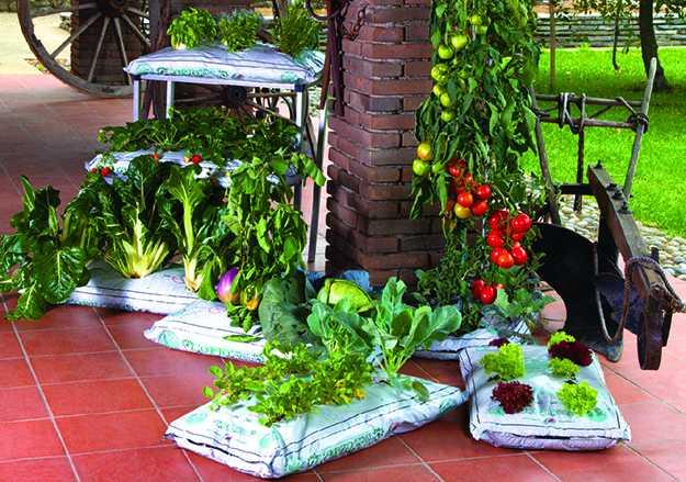 coltivare orto in balcone