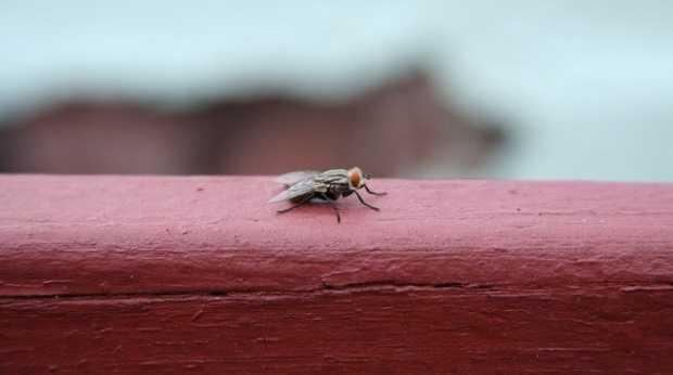 come allontanare gli insetti