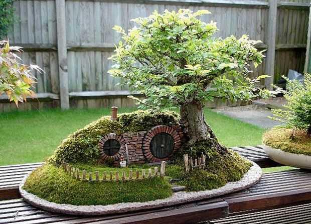 come coltivare i bonsai