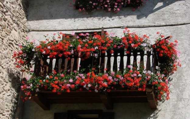 Piante Balcone Est : Come fiorire un balcone indicazioni utili idee green
