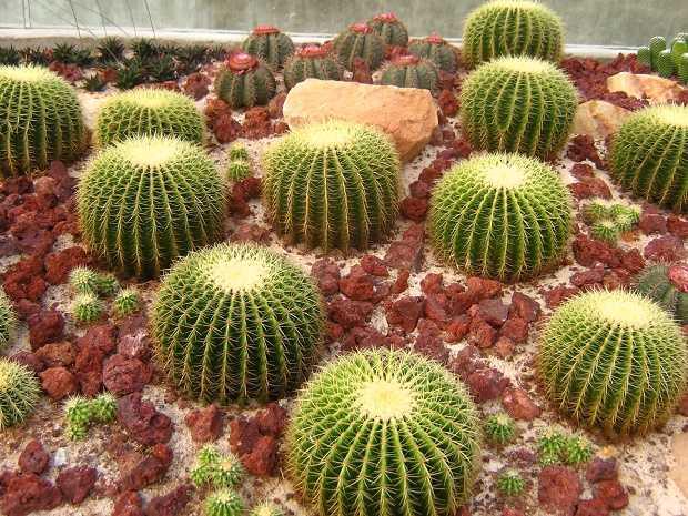 come piantare un cactus