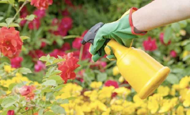 lavori di giugno in giardino e in orto
