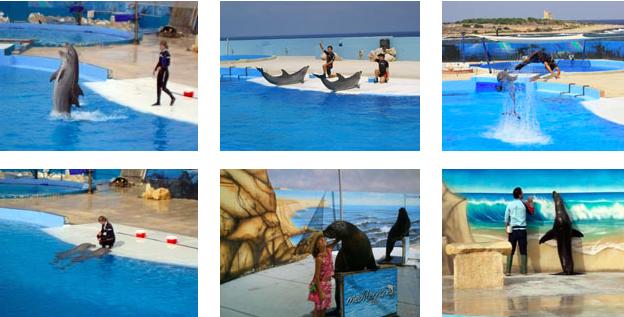 Nuotare con i delfini in italia idee green - Bagno coi delfini roma ...