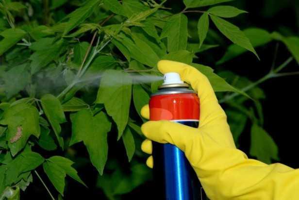 pesticidi naturali orto