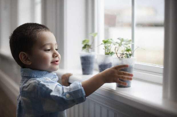 10 piante che purificano l 39 aria di casa idee green - Piante che purificano l aria in casa ...