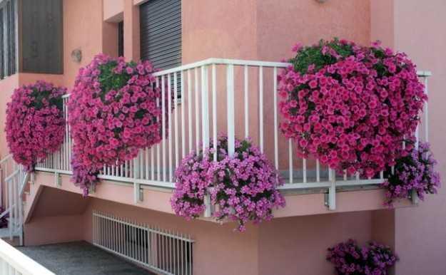Verbena pianta perfetta per il balcone fiorito idee green for Vasi per balcone